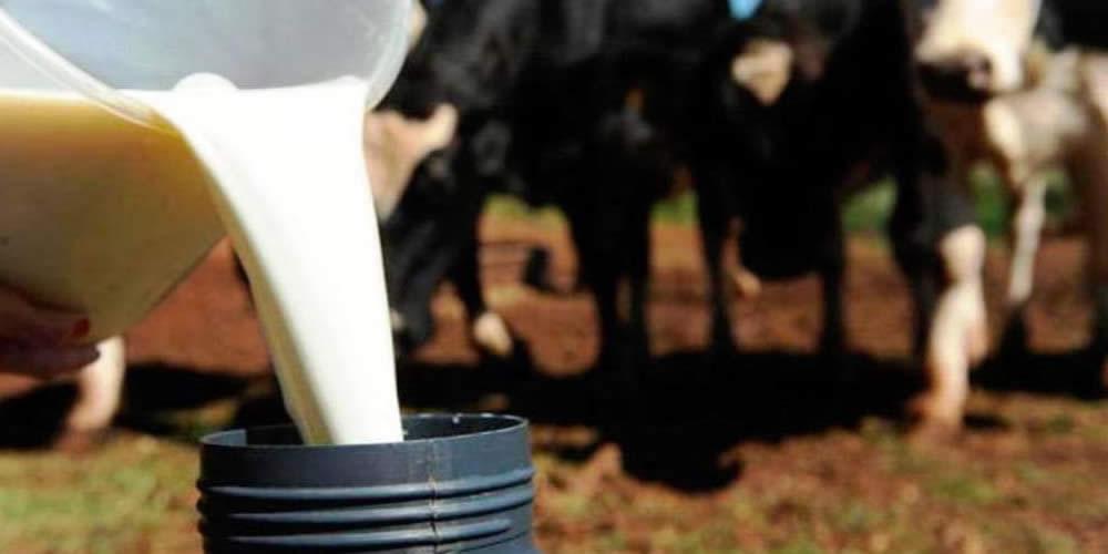 Produtores jogam 1 mil litros de leite na porta da Enel para protestar contra quedas de energia em Jataí