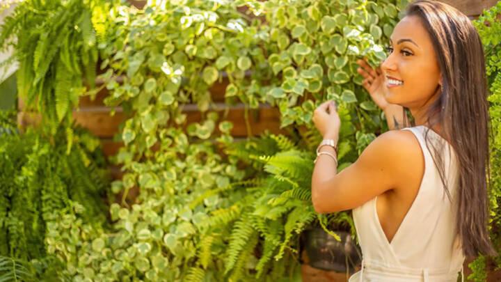 Renovando seu ambiente com plantas